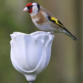 Rose Porcelain Bird Feeder