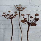 Cow Parsley - Set of 3