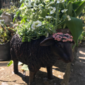Sheep Pot Planter